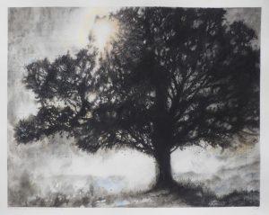 West Melbury oak (1854)