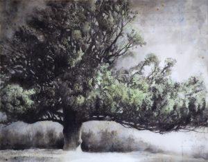 West Melbury oak (1856)