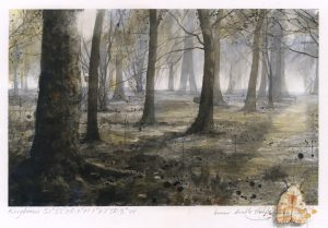 Foxholes Wood No2